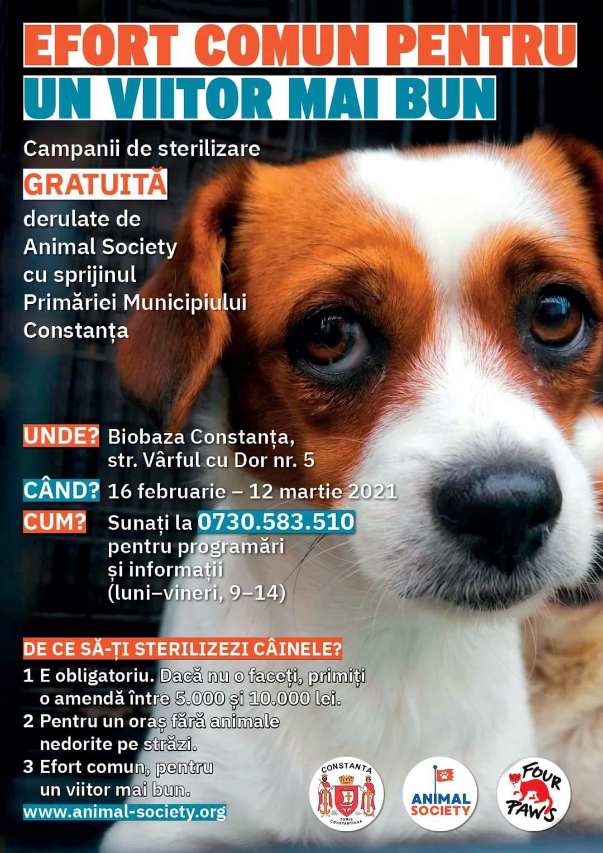Efort comun pentru un viitor mai bun-campanie de sterilizare gratuita pentru animalele de rasa comuna